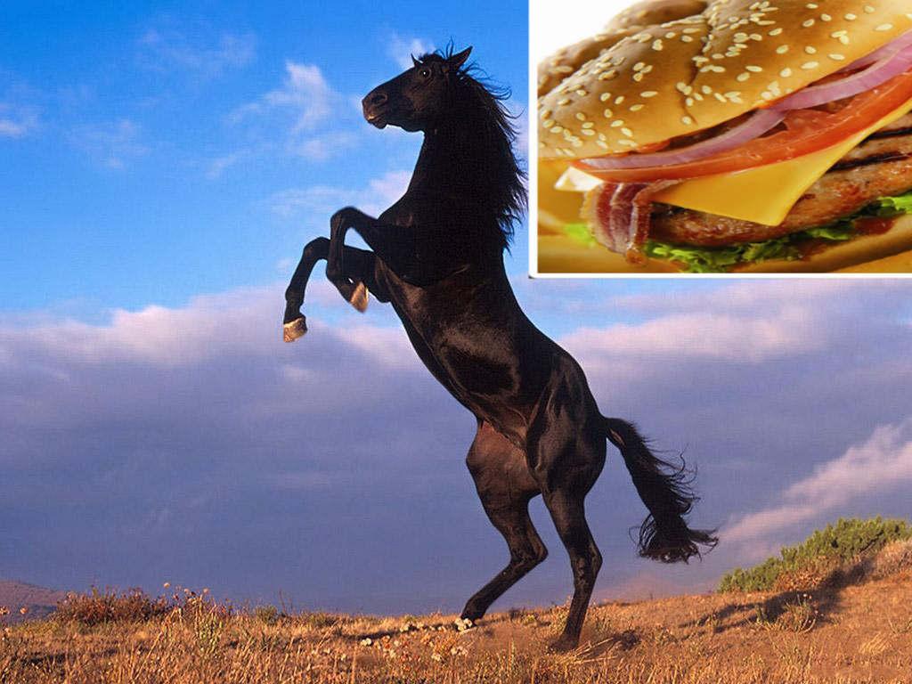 DNA αλόγου και σε επώνυμα παριζάκια; thumbnail