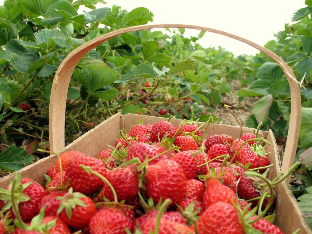 Διώξε τα μαύρα στίγματα με μια φράουλα! thumbnail
