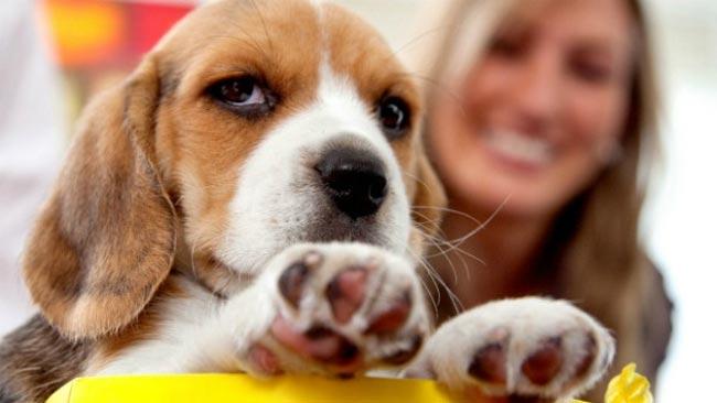 Tα σκυλιά προστατεύουν την καρδιά του αφεντικού τους!  thumbnail