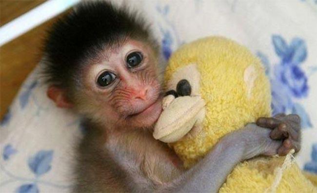 Ένα ερωτευμένο μαϊμουδάκι! thumbnail