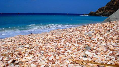 Φωτό: 4 παραλίες γεμάτες... κοχύλια!  thumbnail