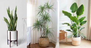 4-φυτά-εσωτερικού-χώρου,-ιδανικά-για-ένα-σπίτι-ή-γραφείο-με-υγρασία