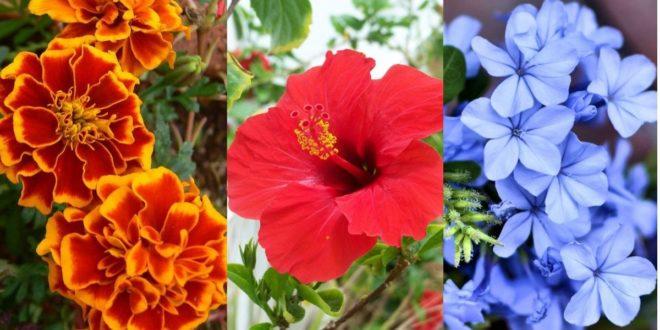 καλοκαιρινά λουλούδια