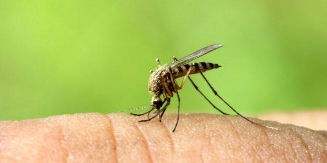 τσίμπημα από κουνούπι