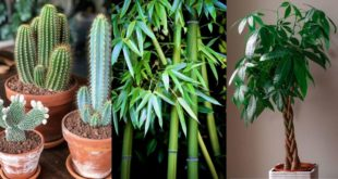 φυτά εσωτερικού χώρου για καλή τύχη και ευημερία
